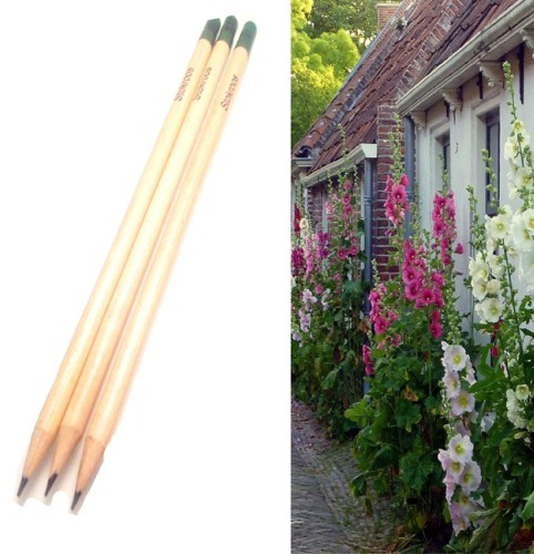 Growth Pencil with Hollyhock with mixed colors